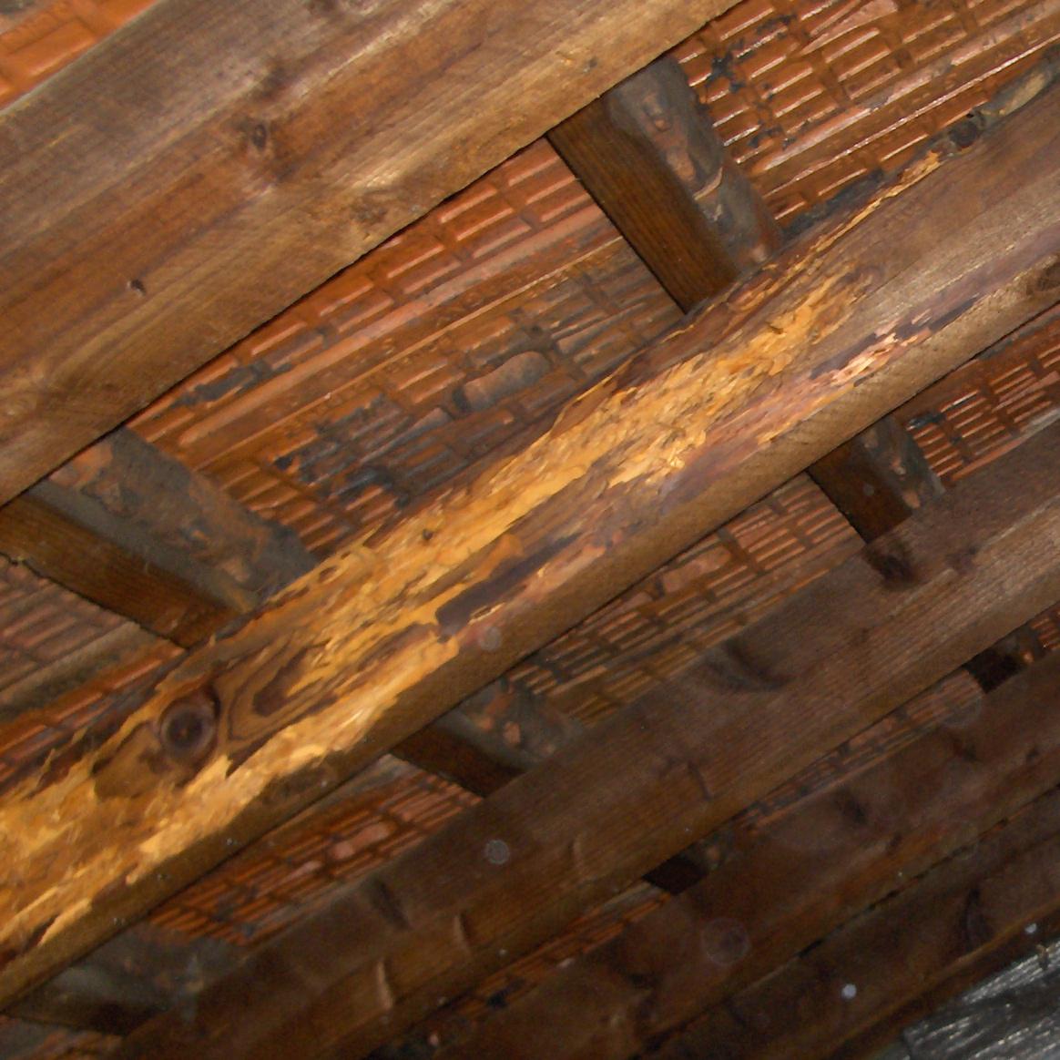 hed traitement bois charpente
